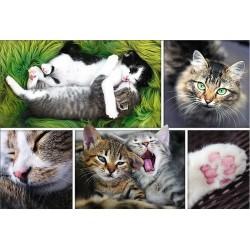 Puzzle Koťátka