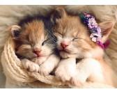 Puzzle Spící koťátka