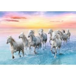 Puzzle Koně na pláži